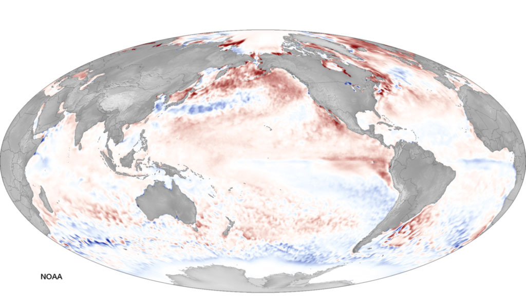 Red means warm. Blue means cold. The latest from NOAA is that El Nino is still on (though it might not be as big as they thought originally). PHOTO: NOAA