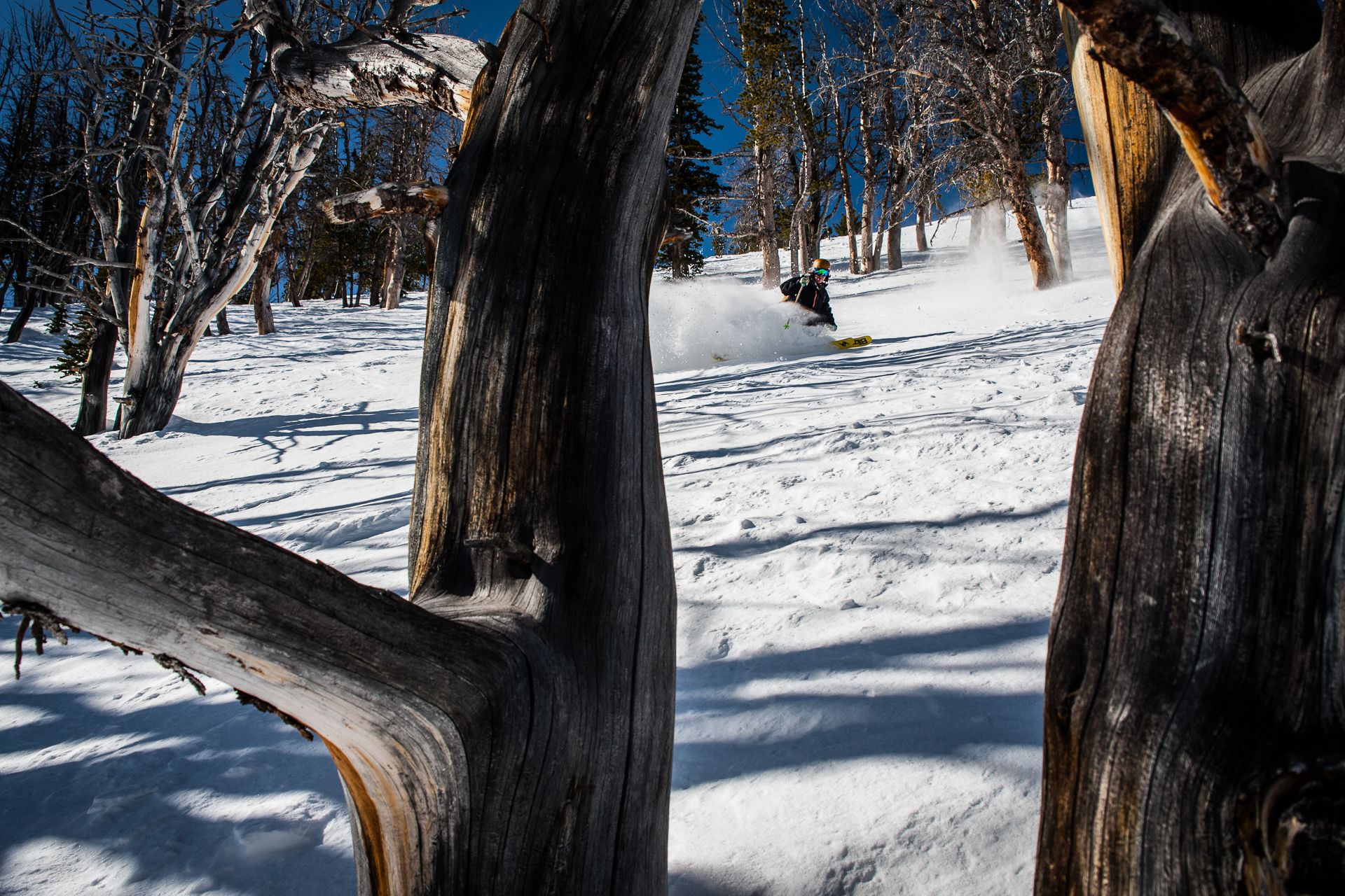 Ski the trees, the trees in your skis. Pat Sewell at Big Sky, Montana. PHOTO: David Reddick